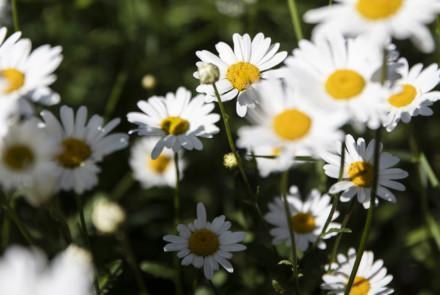 Keväällä kukkivat käsityöt